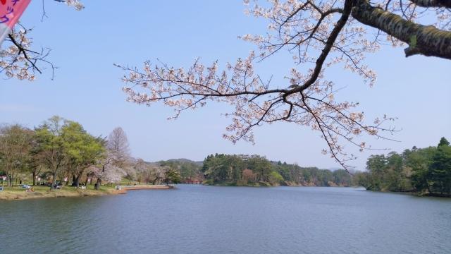 鷹巣中央公園 桜 201804290003