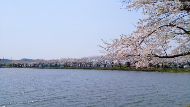鷹巣中央公園 桜 201804290001