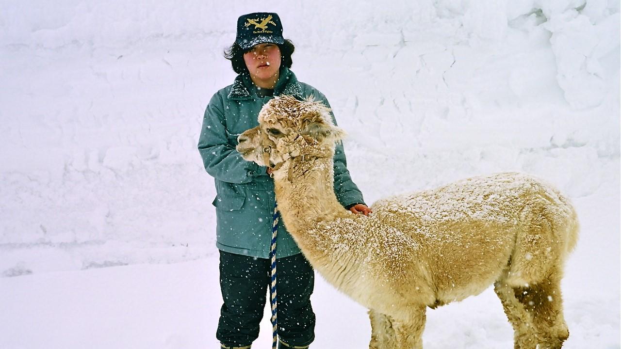 thumbnail_alpaca4.jpg