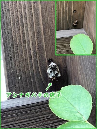 0617-アシナガバチ
