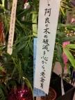 秋葉原 物語 短冊