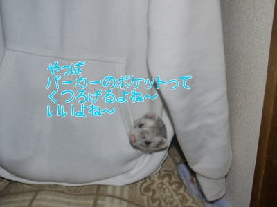 2017年3月1日 おとんじゃなくてパーカーのポケットがすっき~ (5)