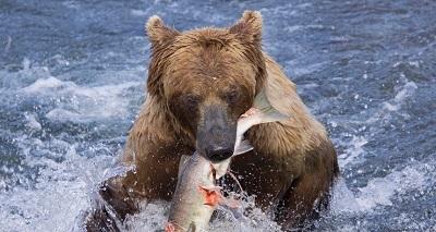 grizzlie.jpg