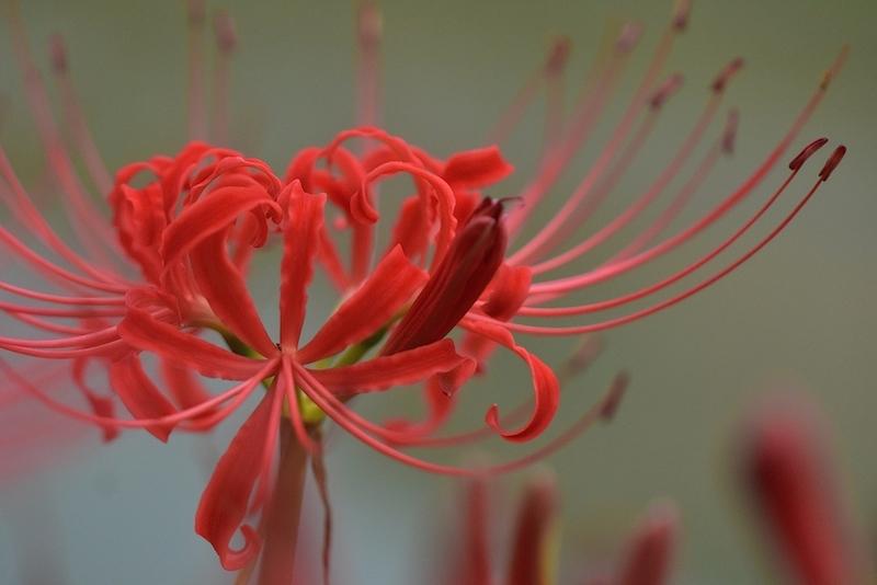 花から花へと