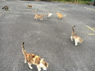 IMG_0263 猫猫猫