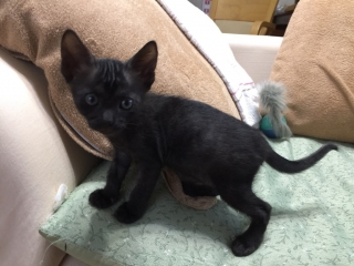 IMG_1848 黒猫