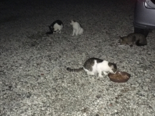 IMG_1999 地域猫