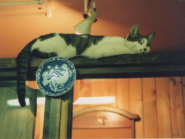 メリーゴーランドの猫 89 - コピー