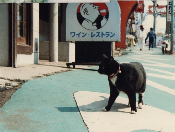 レストラン。Vヴィネの猫'62