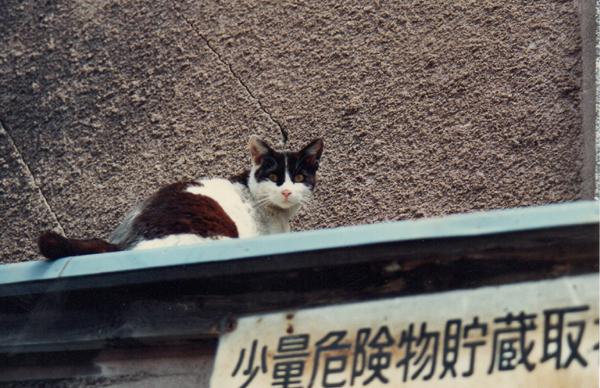 偉そうな猫 1962年 - コピー