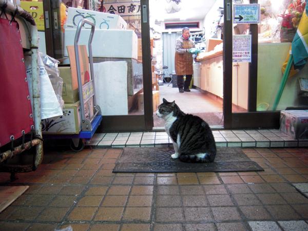 町で見掛けた猫 合田商店