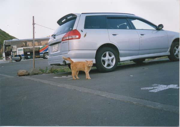祝津の猫のコピー