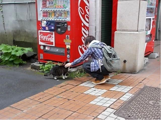 電気館通りの猫2017