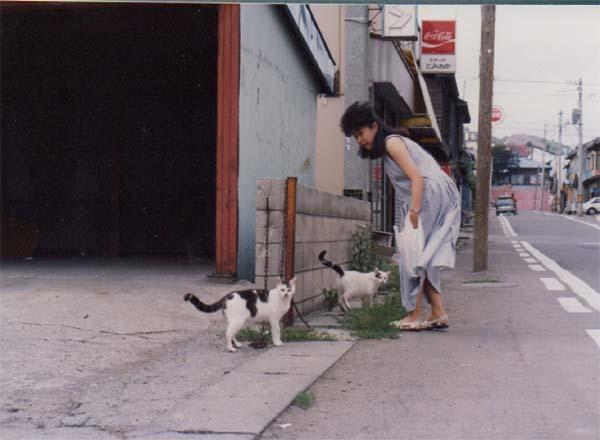 富岡町の猫2
