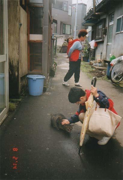 梅ヶ枝町の猫ー