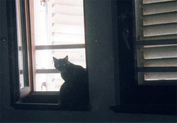 柳井猫のコピー
