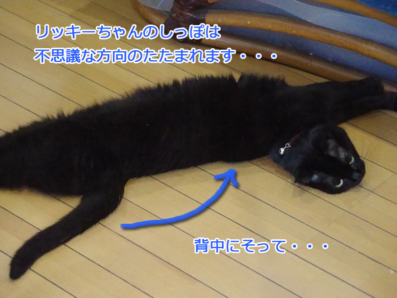 ri_tail.jpg