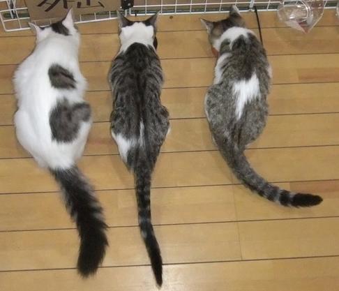 tail1.jpg