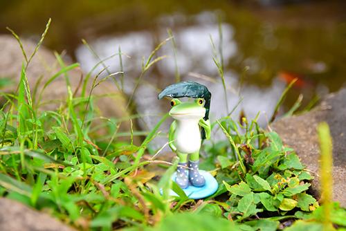 ツバキアキラが撮ったカエルのコポー。雨の草むらで、草の香りを楽しんでいるコポタロウ。