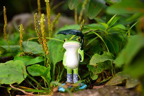ツバキアキラが撮ったカエルのコポー。ニョキニョキ伸びている草を見て笑っているコポタロウ。