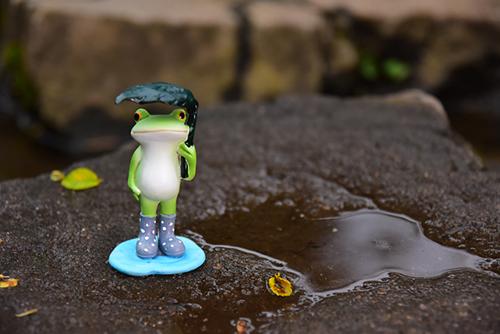 ツバキアキラが撮ったカエルのコポー。雨の日に傘をさして歩くコポタロウ。
