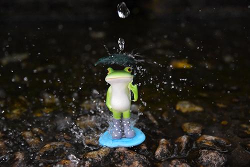 ツバキアキラが撮ったカエルのコポー。傘に大きな水滴が落ちてきました。