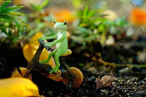 ツバキアキラが撮ったカエルのコポー。木でできた自転車で、秋の風景に溶け込むコポタロウ。