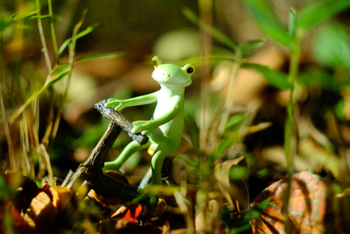 ツバキアキラが撮ったカエルのコポー。木の自転車で、草むらの中を走るコポタロウ。