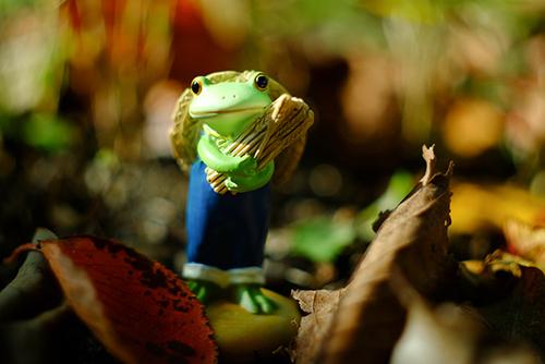 ツバキアキラが撮ったカエルのコポー。収穫の秋で、ちょっと忙しいコポタロウ。