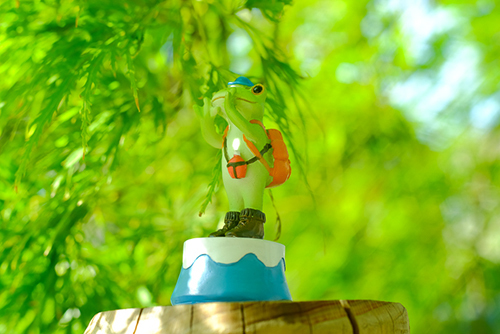 ツバキアキラが撮ったカエルのコポー。緑のカエデの中で、登山をしているコポタロウ。