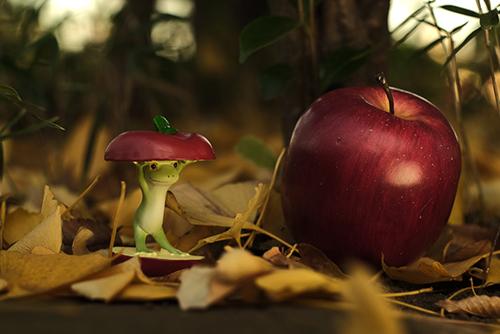 ツバキアキラが撮ったカエルのコポー。落ち葉の草むらで、大きなリンゴを見つけたコポタロウ。
