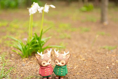 ツバキアキラが撮った、VAG・MORRIS、通称・つのねこ。ピヨーンと茎の長いお花が咲いているのに興味津々です。