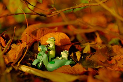 ツバキアキラが撮ったカエルのコポー。落ち葉の草むらをサイドカーで走る、コポタロウとコポミ。