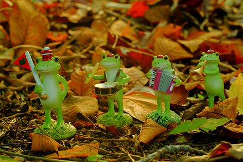 ツバキアキラが撮ったカエルのコポー。落ち葉の中を行進するコポタロウ楽団。