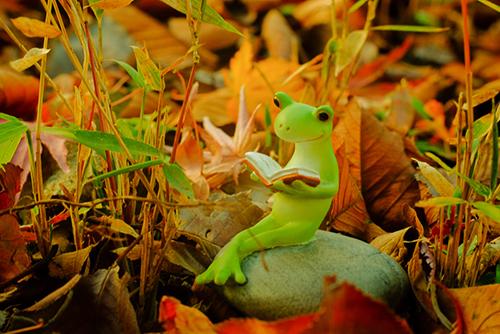ツバキアキラが撮ったカエルのコポー。落ち葉の中で本を読んでいるコポタロウ。