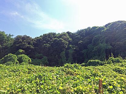kozuta-02.jpg