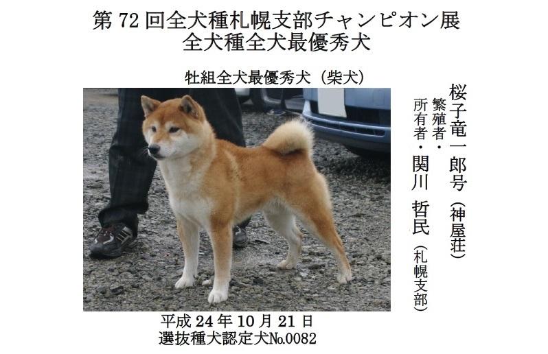 201808札幌-01全犬最優秀犬牡
