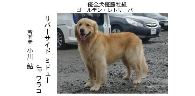 201808札幌-03優全犬牡