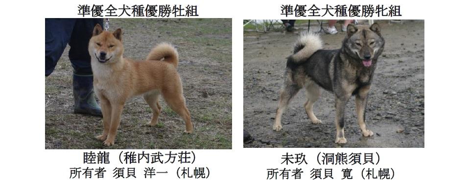 201808札幌-04準優全犬