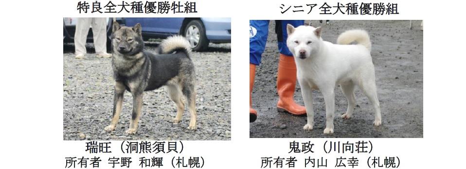 201808札幌-05特良牡シニア全犬