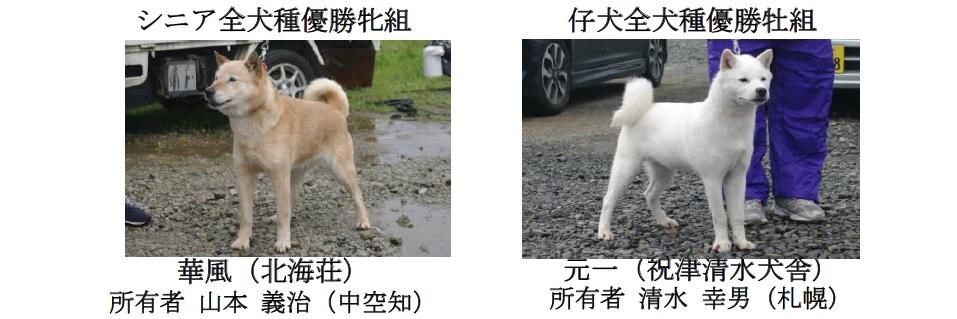 201808札幌-06シニア仔犬全犬
