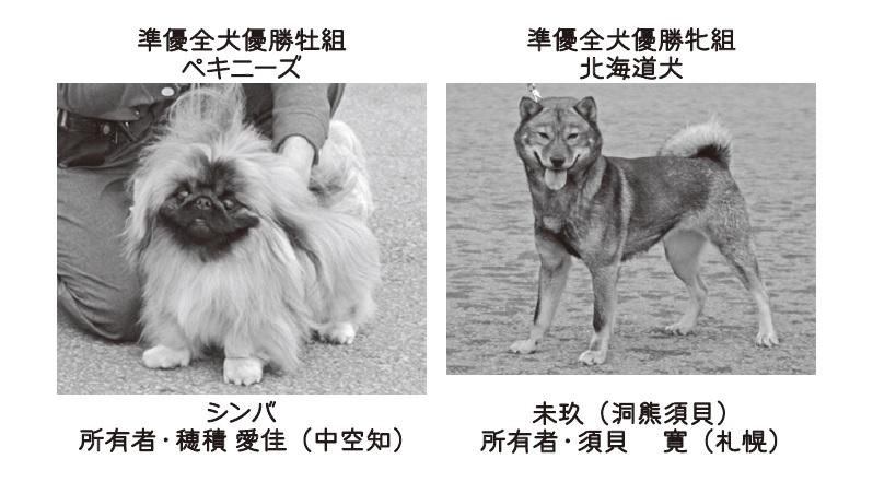 201806中空知-04