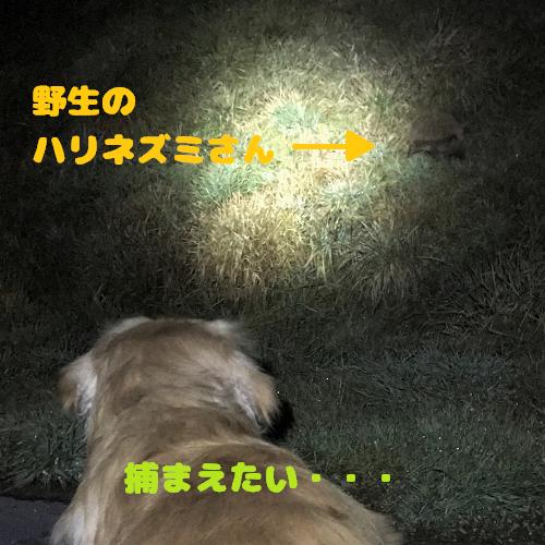 gaku (149-3)