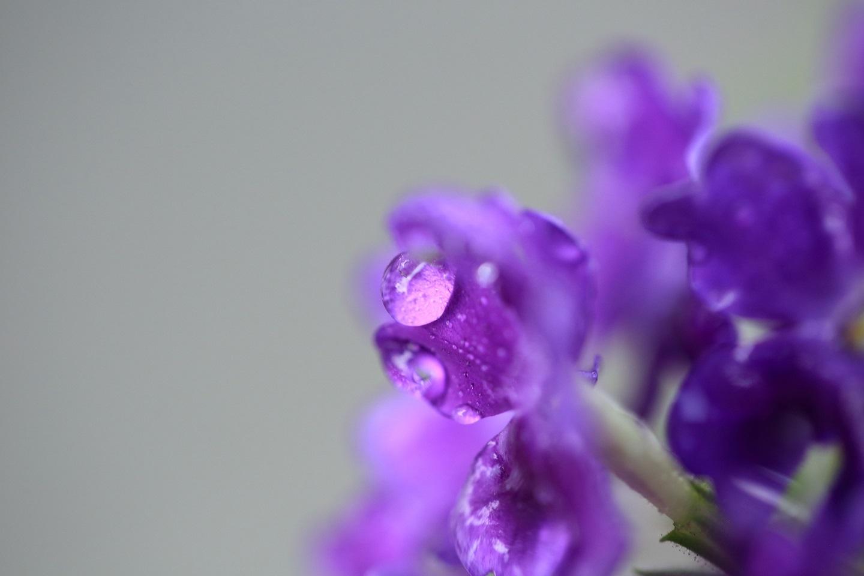 ブログ 水玉 紫花.jpg