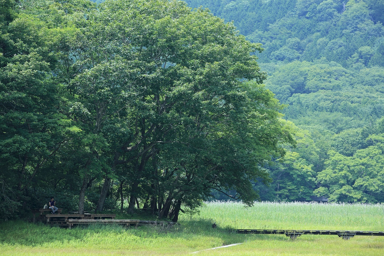 ブログ 猛暑日 木陰でランチ.jpg