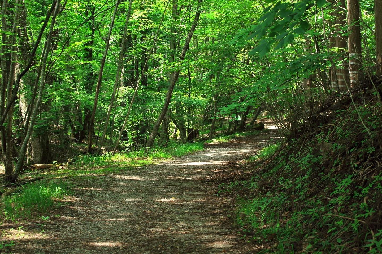 ブログ 高原の木陰の散歩道.jpg