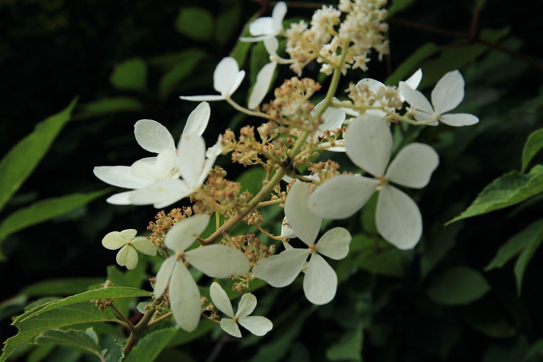 ブログ 白い花 1.jpg