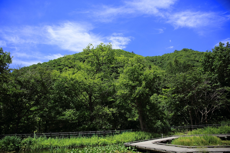 ブログ 夏の山.jpg