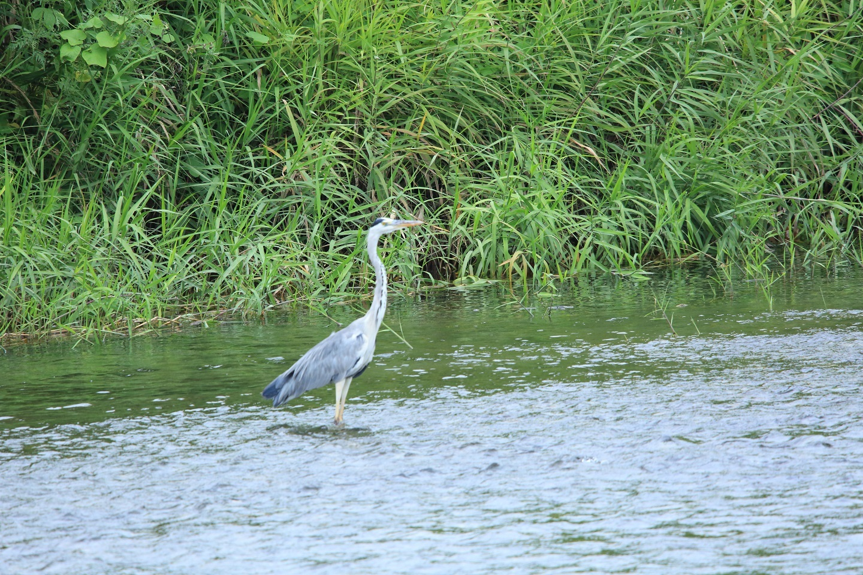 ブログ 河に立つ鳥.jpg