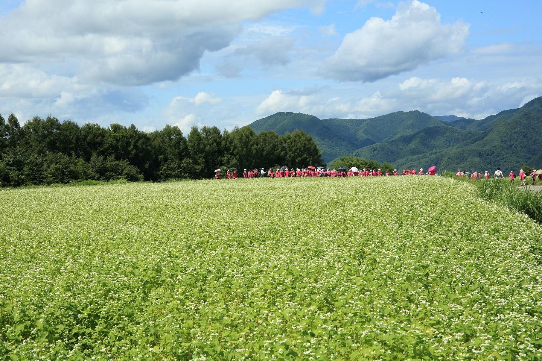 ブログ ソバ畑に現れた赤い軍団.jpg
